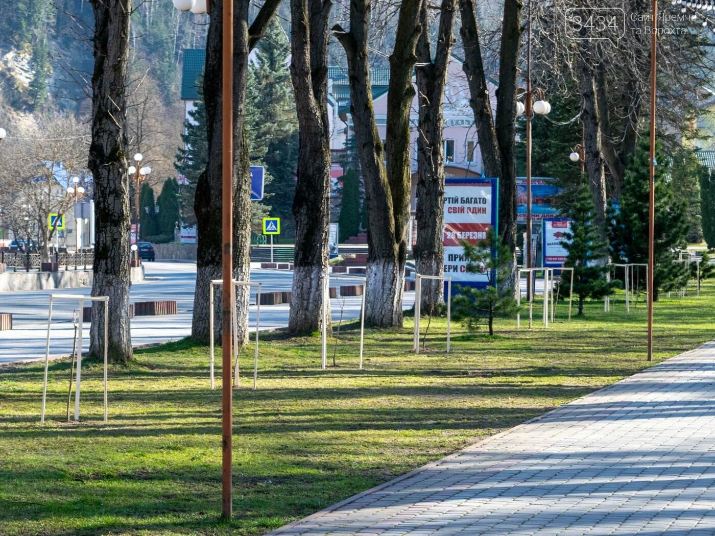У Яремче з'явилася алея сакур, фото-2